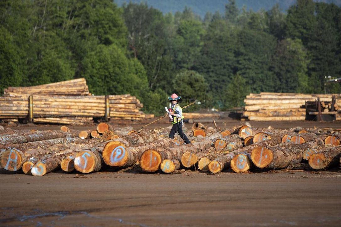 Positive development in Vietnam's wood export