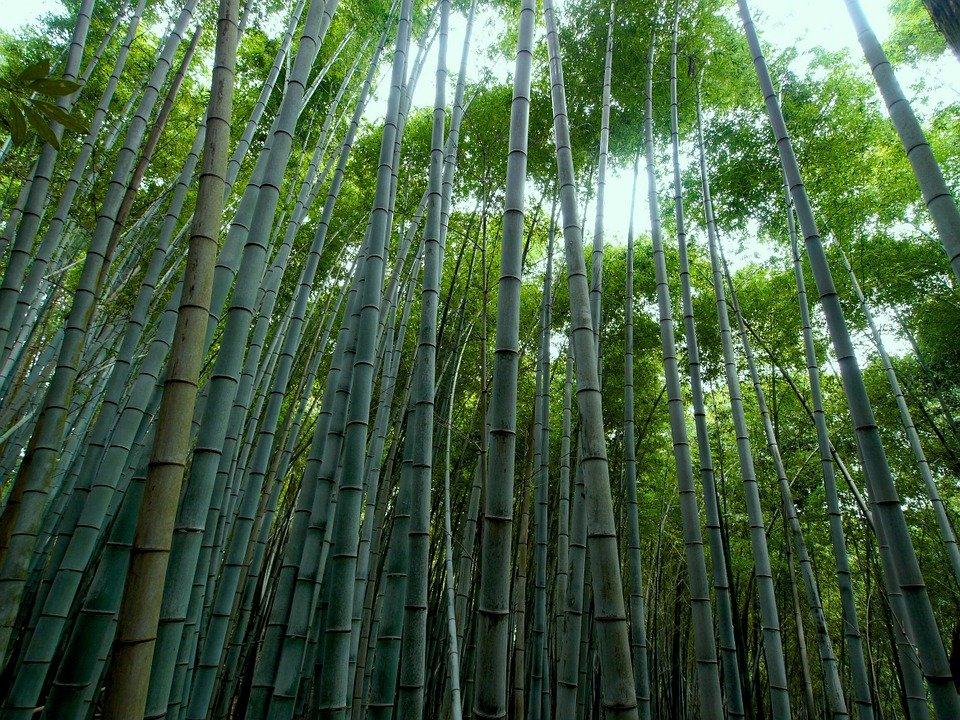 Bamboo material in Vietnam